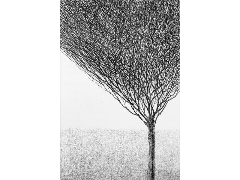 Association-Hiroko-Okamoto-Galerie-Nature-En_Haut_VI
